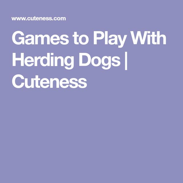 Games to Play With Herding Dogs | Cuteness