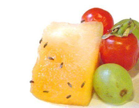 Moscas da fruta: previna para não ter problemas depois!