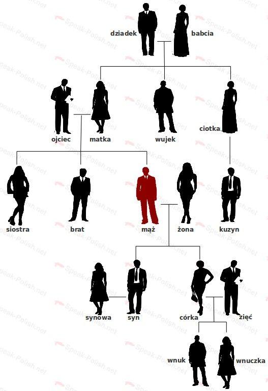 Polish Vocabulary - Family Tree