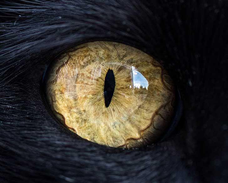 Al ser alérgico a los gatos, ésta fue la forma que ideó para acercarse a ellos.
