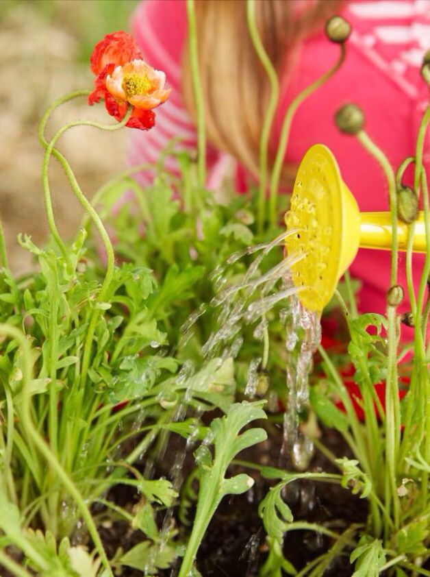 How to Grow Poppies Summer garden 26
