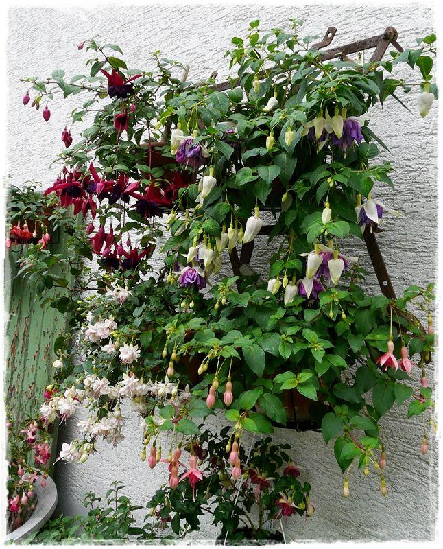 Pin Von Kathrin Wagner Auf Pflanzen: Fuchsienrots Garten - Blog