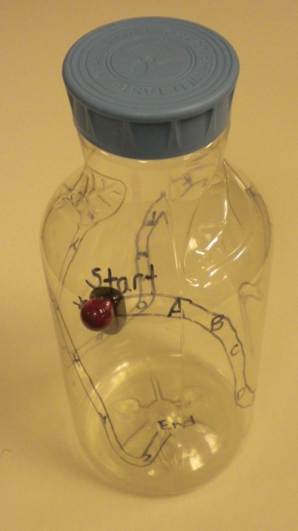 Bottle maze: clean out an empty juice bottle, draw a maze along the outside with letters placed about every inch; place a magnet inside the bottle and one on the outside to hold and trace. Great for bilateral coordination and crossing midline.