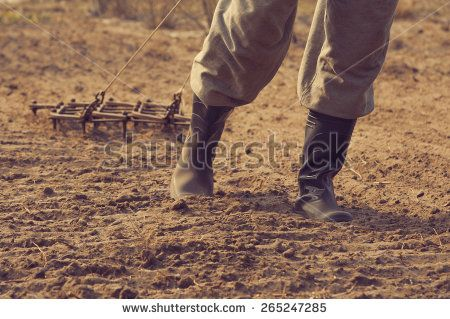 The man plows the earth an iron plow in the spring. Old garden tools. Agriculture. - stock photo