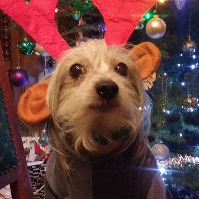 Rudolf :)