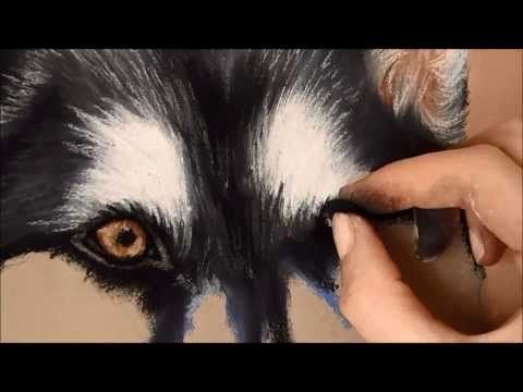 ▶ Timelapse | Soft Pastel Drawing of a Husky - YouTube