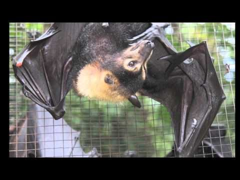 ▶ All About Bats - YouTube