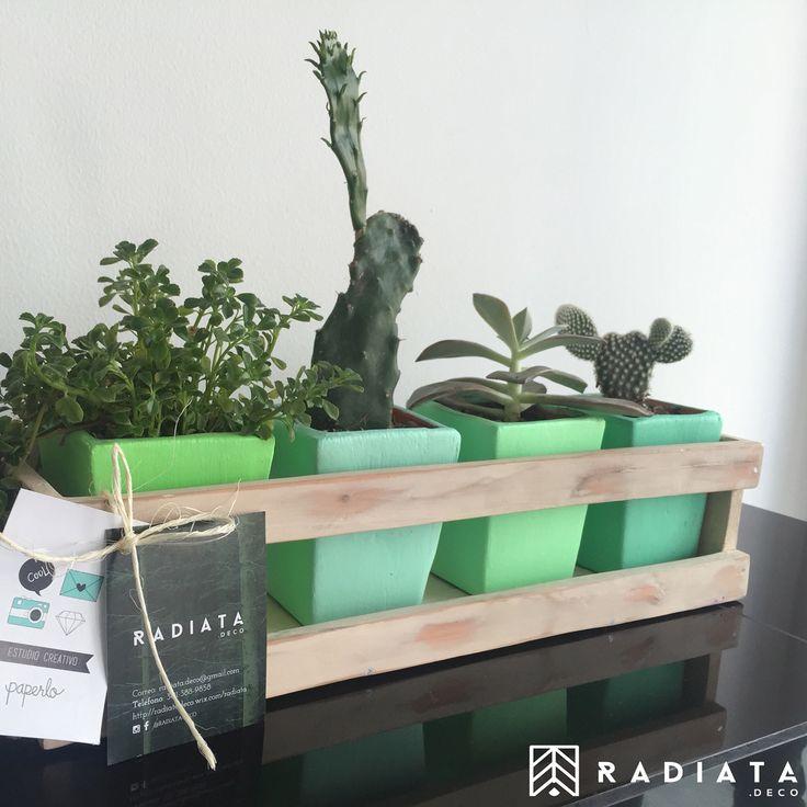 Materitos con hermosas plantas... Cajitas decorativas!