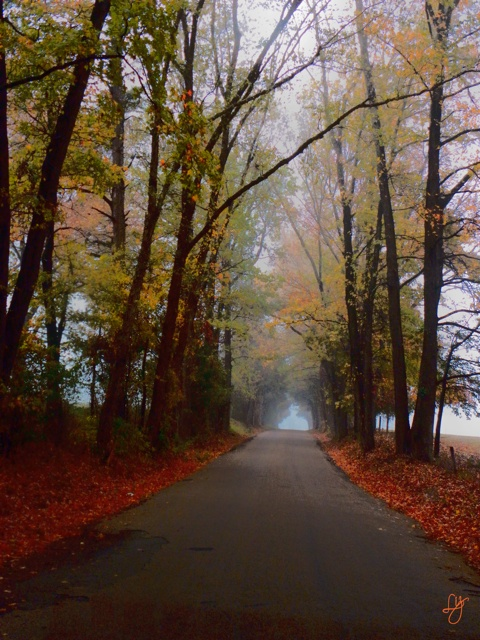 Foggy Road: Foggy Roads, Country Roads, Beautiful Places, Photography Ideas