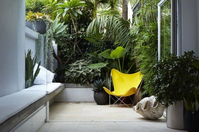 Tiny Paddington courtyard designed by Think Outside Gardens creates a seamless flow between the interiors and the outside area.