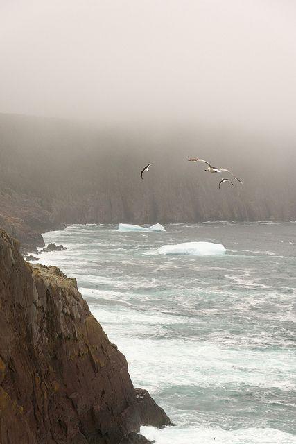 Fog, Gulls and Bergs - Newfoundland by Hyacinthe Raimbault, via Flickr