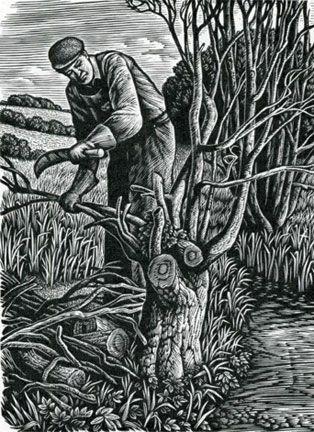 """""""Woodman"""" by Howard Phipps (wood engraving)"""