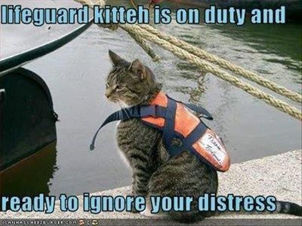 Funny Lifeguard Meme : Best lifeguard images life guard swimming and ha ha