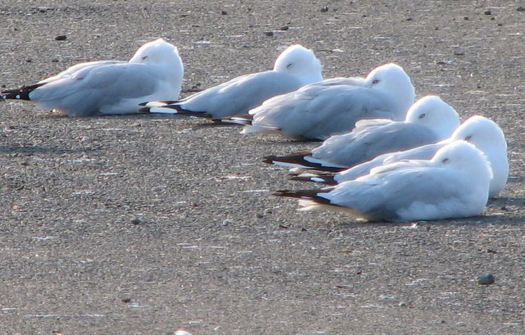 Let sleeping gulls lie