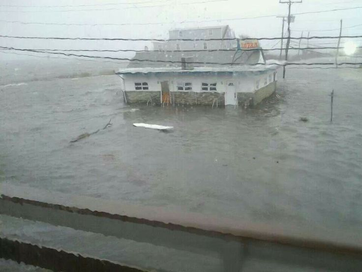 Hurricane sandy pictures shark