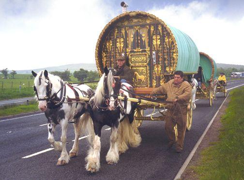 Gypsy Vanners in their natural habitat: Gypsy Horses, Irish Tinker, Things Irish, Irish Culture, Irish Travel, Gypsy Wagon, Bows Tops, Irish Cob, Gypsy Caravans