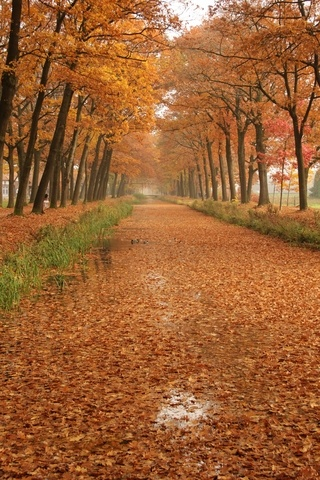 Nature in Griendtsveen, Netherlands (last sunday was again village beautiful autumn nature) - a photo by elly holland