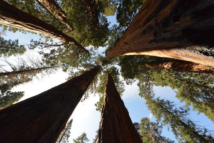 Sequoia National Park или же Национальный парк Секвойя - http://architecturebest.com/maps/sequoia-national-park-ili-zhe-nacionalnyy-park-sekvoyya.html