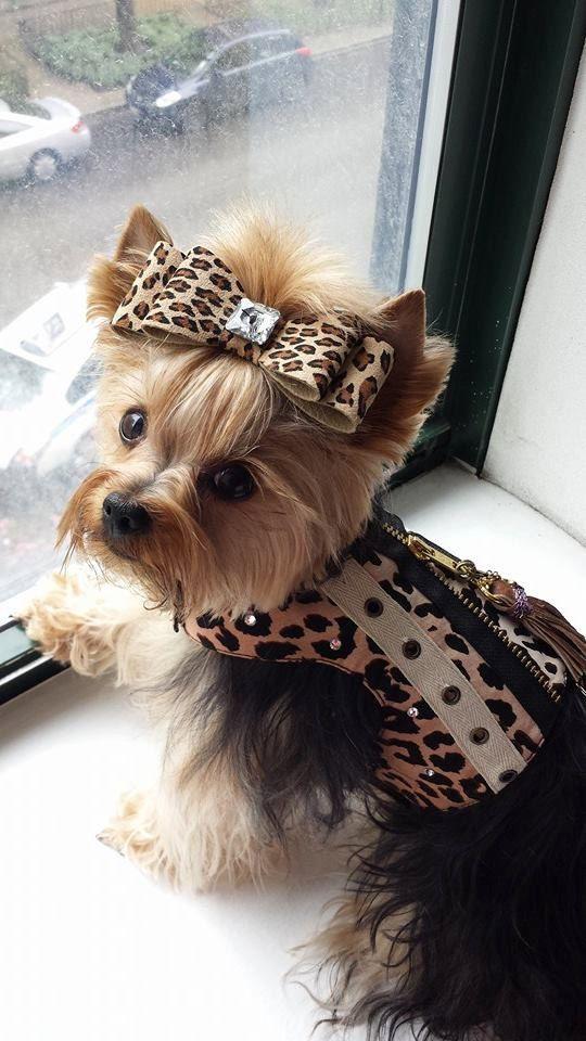 Leopard Rocker Couture Vest, Unisex Trendy Animal Print Harness Vest