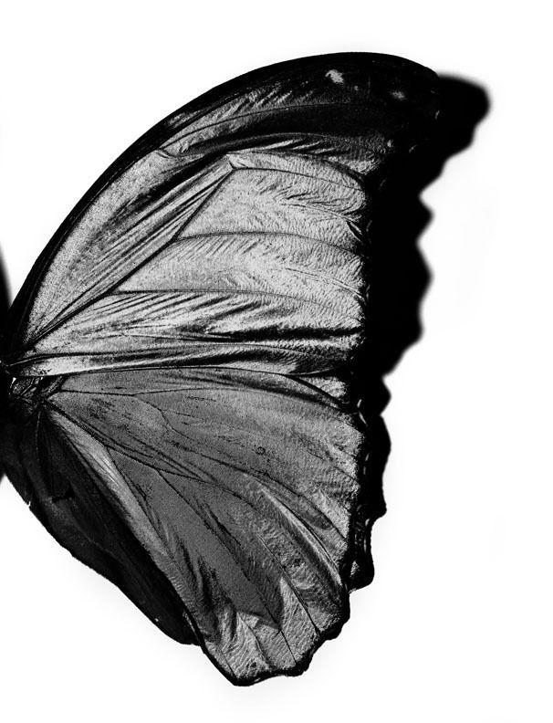 Sliced lemon on white background. Butterfly Wing, New York City, 2005 | Black aesthetic ...