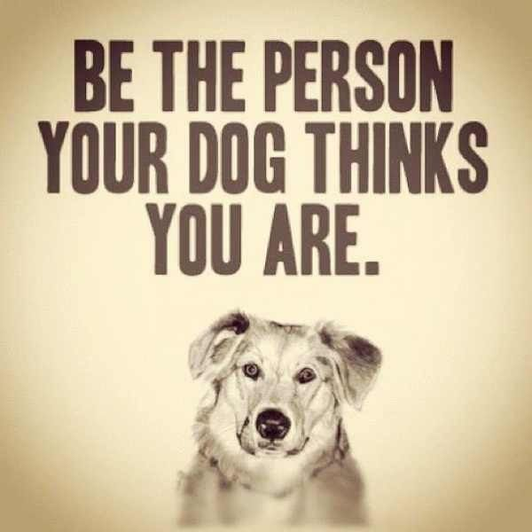 Inspiration from your dog