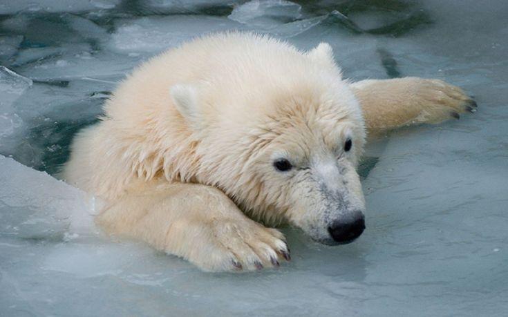 Top 30 Photos of polar bears