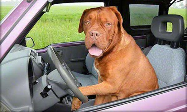 Бесплатный онлайн тест покажет насколько хорошо Вам удается водить автомобиль.