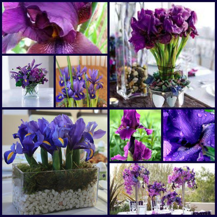 Types Of Purple Flowers