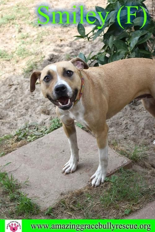 Adopt Smiley On Adoption Therapy Dogs Pet Adoption