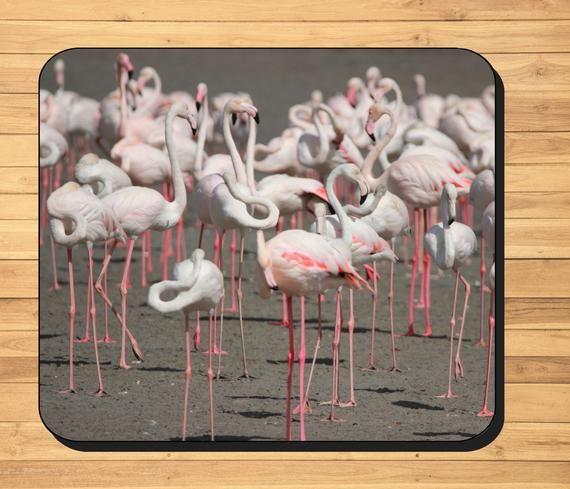 Flamingo Photo Placemats Featuring Original Photo Of A Flock Etsy Flamingo Photo Photo Placemats Photo Coasters