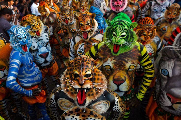 ¡Los tigres cuando están de buen ánimo, bailan!. Es lo que hacen en las calles de Swaraj en Thrissur, India. Celebran la fiesta del Oman con el excitante Kali Puli o la danza de los tigres. Escenifican escenas y juegan al escondite con un cazador. (Arun Sankar)