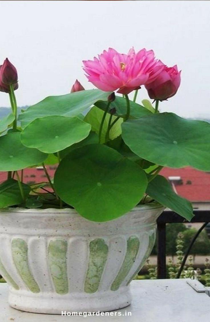 Best Oxygenating Plants Small Ponds