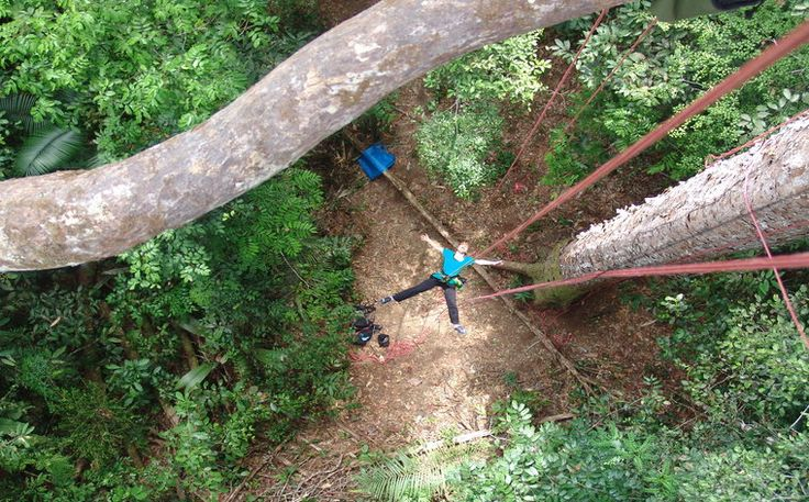 Turismo de aventura - Escalada em árvore na Amazônia