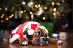Merry Christmas Card Puppy Holiday Dogs Santa Claus Dog Puppies Xmas Boxer Boxers