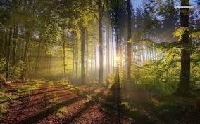 en los bosques  ver el sol entre los arboles nada mas que admirar simples paisajes