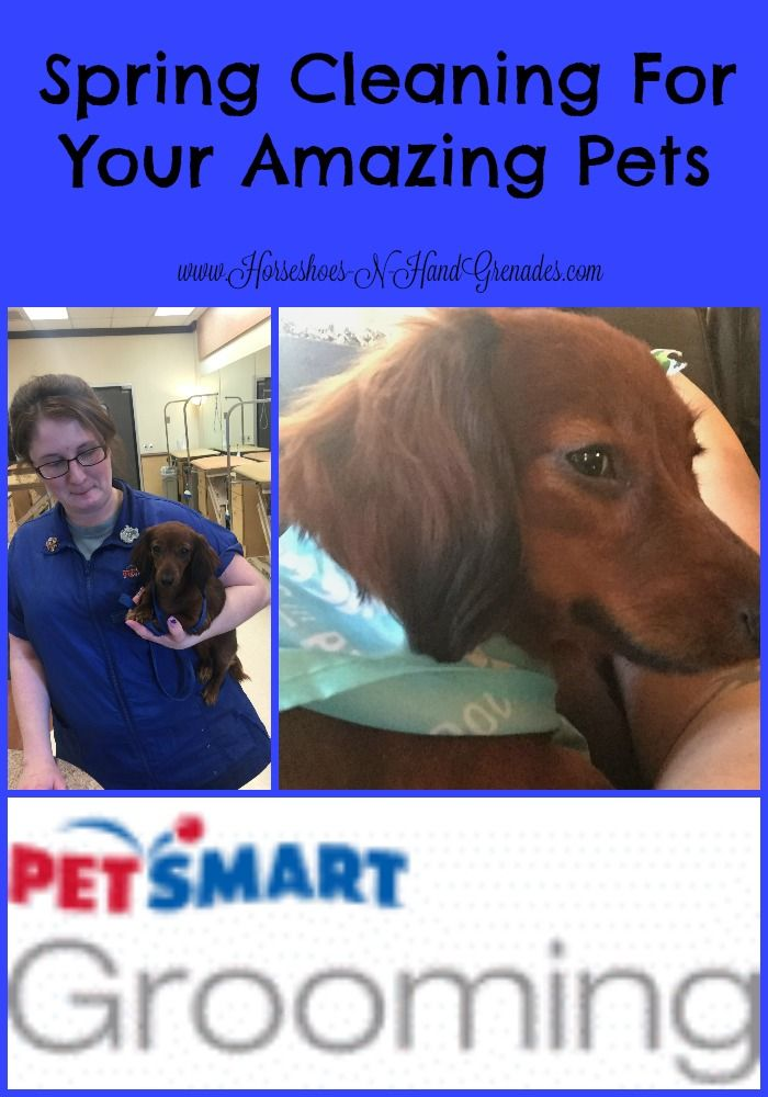 Spring Cleaning For Your Amazing Pets Petsmartgrooming Petsmart Grooming Spring Cleaning Pets