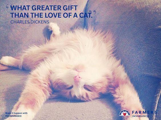 Pets Best Pet Insurance Pet Health Insurance For Dogs Cats Dog Insurance Best Pet Insurance Cool Pets