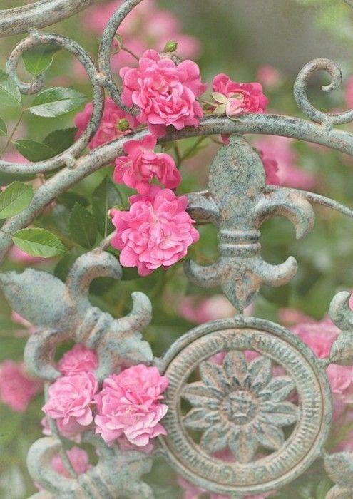 .: Pink Flowers, Climbing Rose, Wrought Irons Gates, Garden Gates, Flower, Gardens Gates, De Lis, Pink Rose, Iron Gates