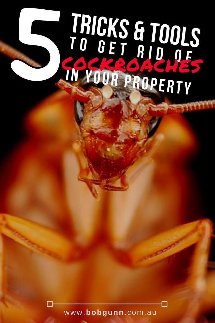 Cockroaches can easily infest a home, especially when it's not well looked after. You can prevent and get rid of them by following these five super easy tips.