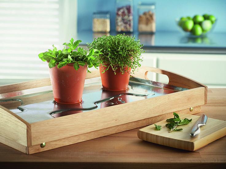 Cultive brotes de plantas esta temporada o mantenga las hierbas frescas en su cocina todo el año con este solario reflectante y conservador de agua para encima de la mesa.
