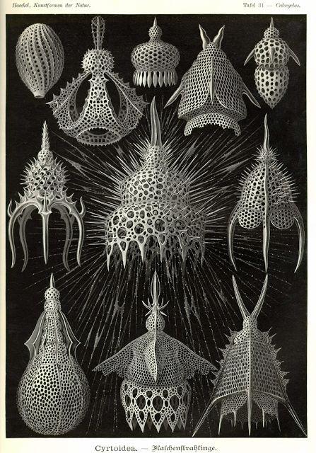 Haeckel  #dailyconceptive #diarioconceptivo