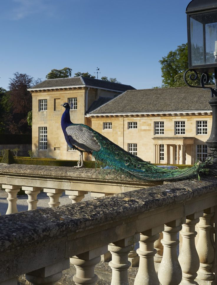 Cornbury Park - Cotswolds, Oxfordshire, United Kingdom | Avenue Properties