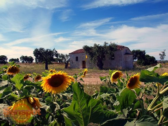 The small chapell of St.George,Fine Art Photography,home decor,travel photography,sunflowers