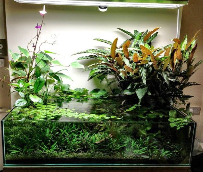 1000+ Ideas About Aquarium Backgrounds On Pinterest