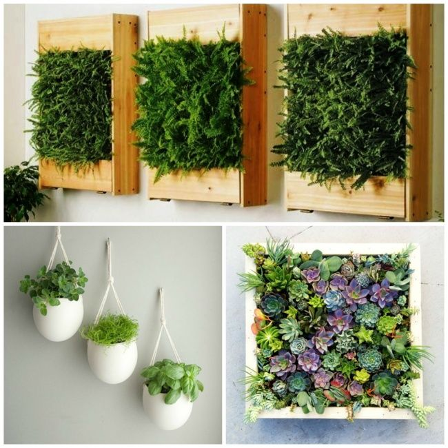 A vertical wall garden is a stylish and original interior solution that benefits your health.