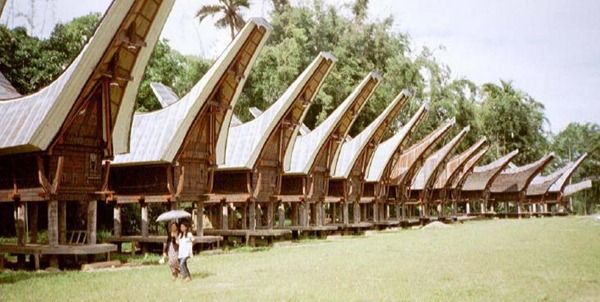 Tongkonan is the traditional ancestral house, or rumah adat of the Torajan people, in Sulawesi, Indonesia. Tongkonan have a distinguishing boat-shaped and oversized saddleback roof. Like most of Indonesia's Austronesian-based traditional architecture tongkonan are built on piles. The construction of tongkonan is laborious work and it is usually built with the help of all family members. In the original Toraja society, only nobles had the right to build tongkonan.