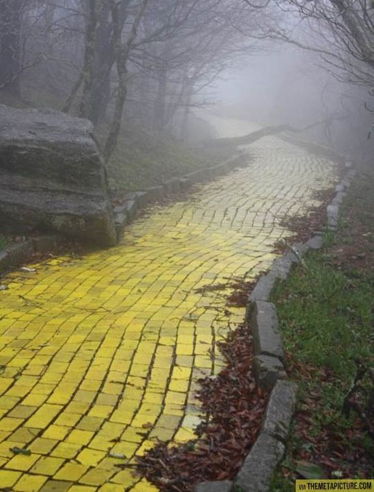 "The yellow brick road from the abandoned theme park ""land of oz"" in Beech Mountain, North Carolina."