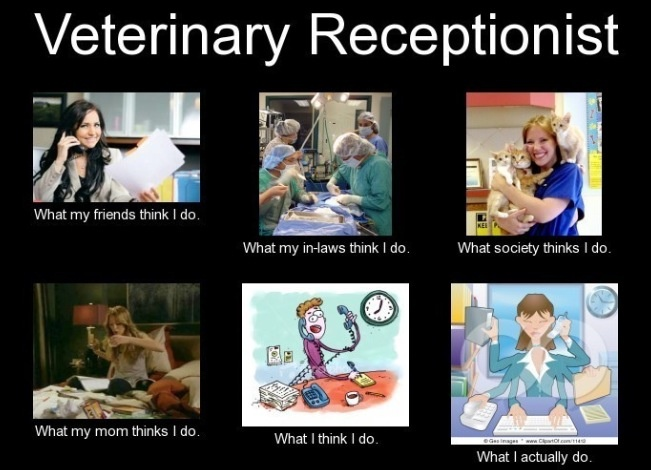the 25  best veterinary receptionist ideas on pinterest