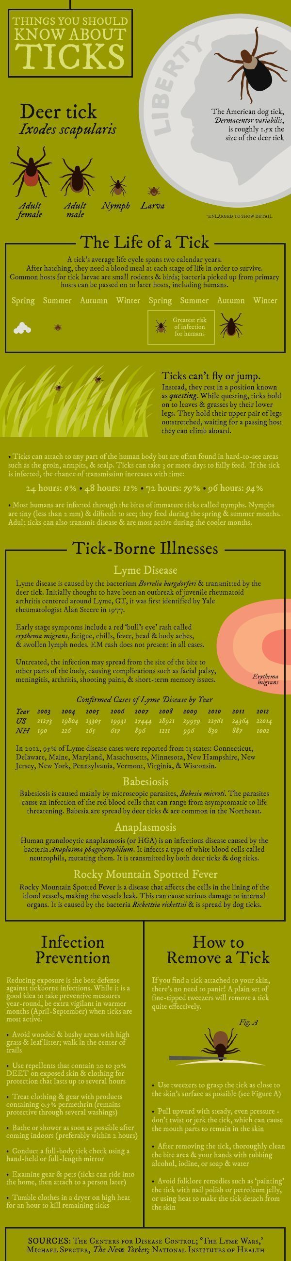 Things You Should Know About Ticks [Infographic] | New Hampshire Public Radio #huntinginfographic