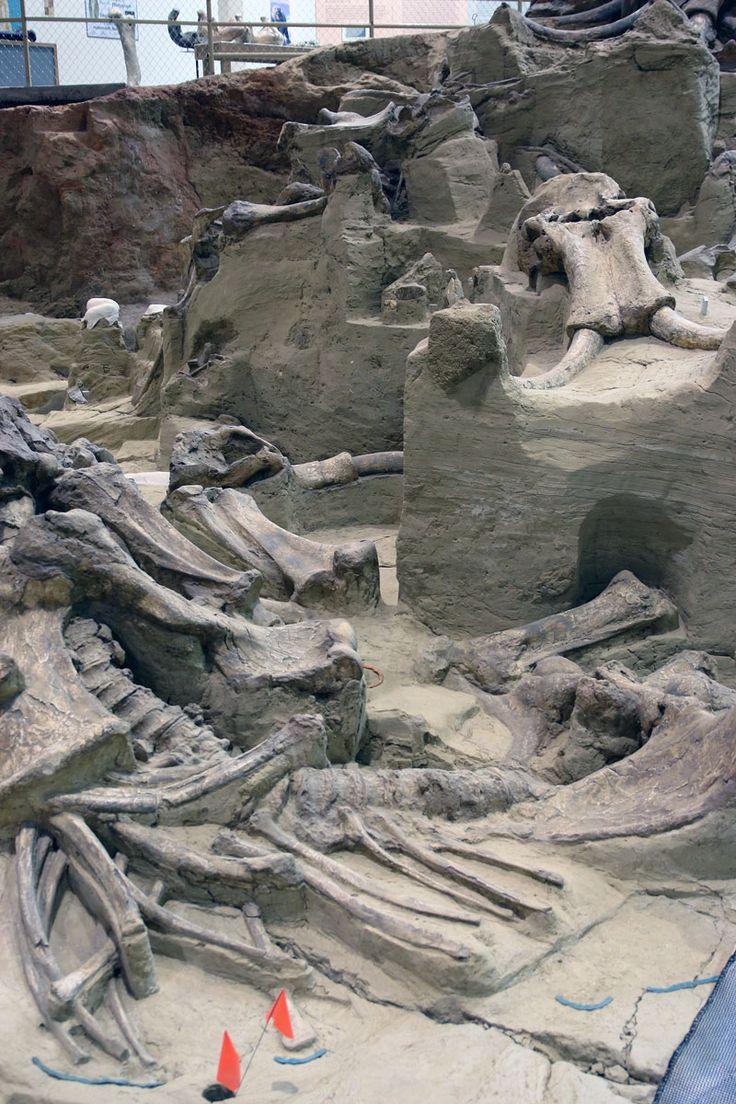 Mammoth Site - Hot Springs, South Dakota #dan330 http://livedan330.com/2015/07/23/mammoth-site-hot-springs-south-dakota/